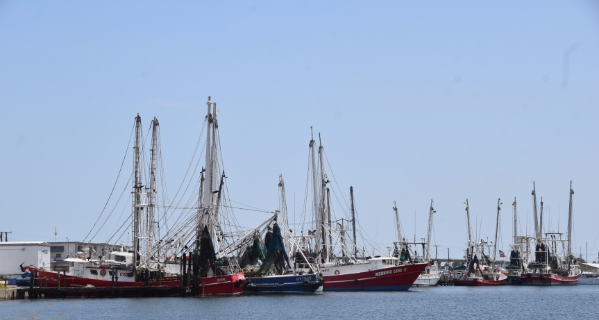 Shrimp boats fill docks in Conn Brown Harbor
