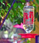DSC_0203-hummingbird-feeder